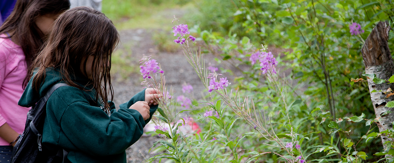 web_fireweed_Outdoors
